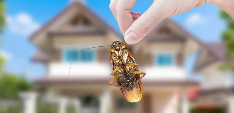 Top 4 Truth about Bug Control you should know