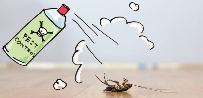 Top 4 Hacks for Safer Pest Control