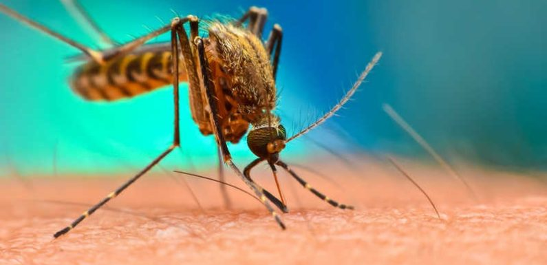 Top 5 Mosquito Myths Debunked