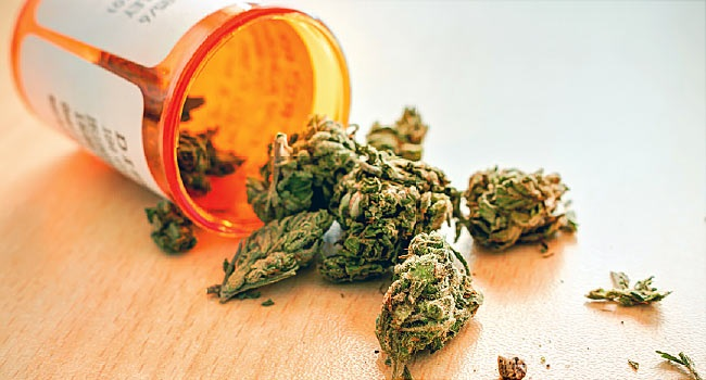 The Use of Medical Cannabis in Medicine