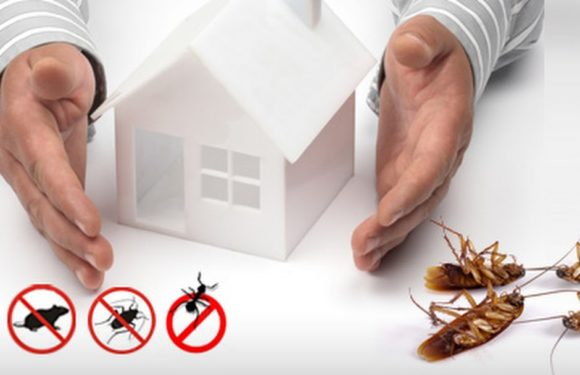 Ask these 5 questions while interviewing pest control services in Texas