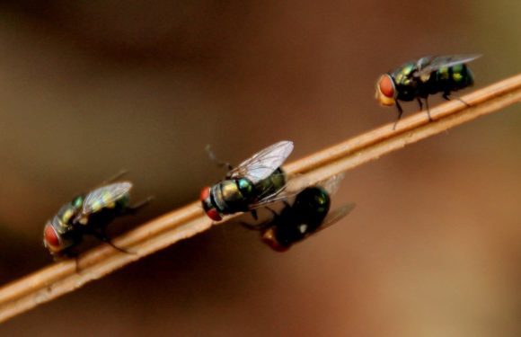 Methods You Should Follow to Control Pests in Your Home