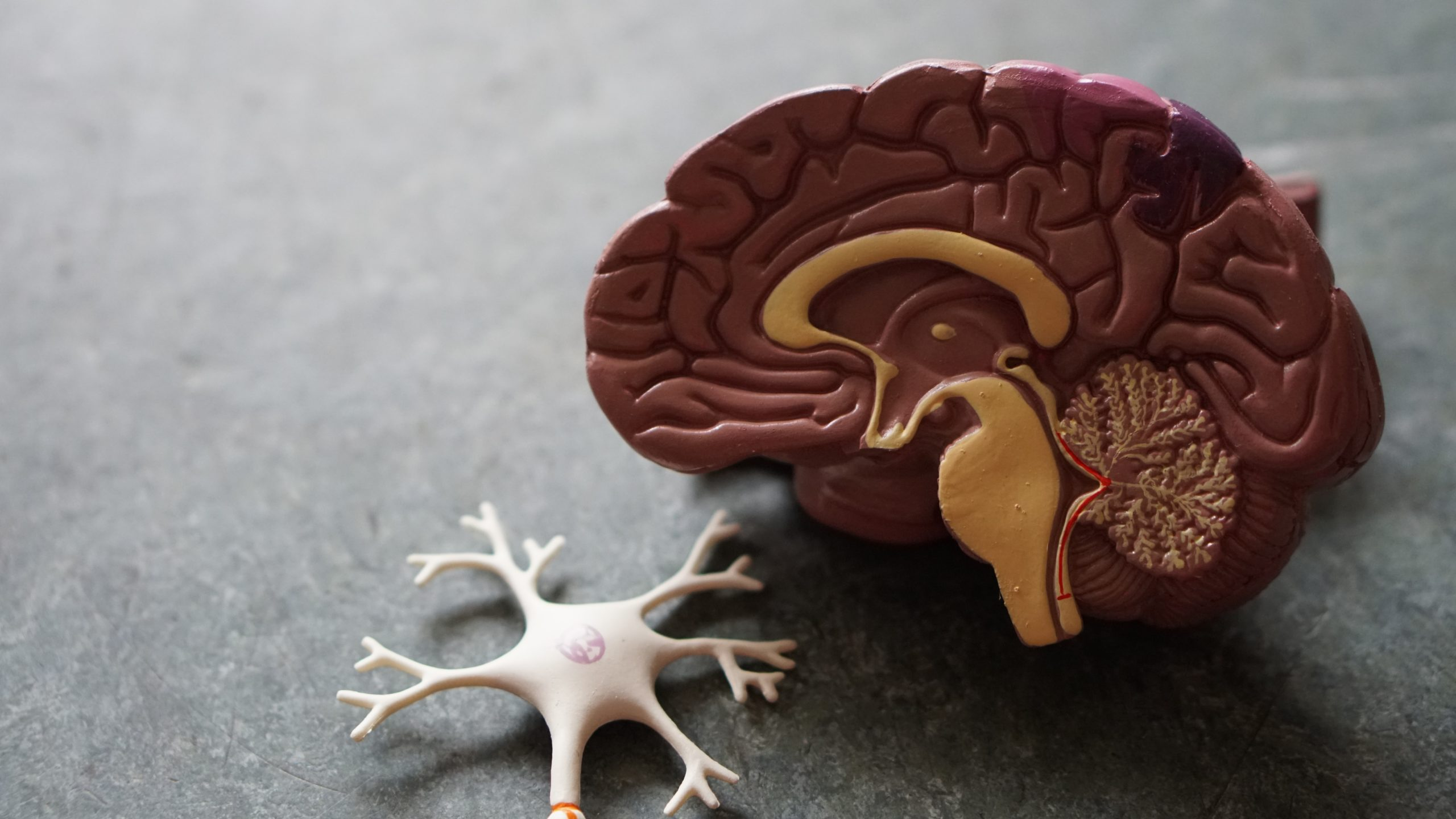 Alzheimer's Disease: Vital Info You Should Know About This Condition